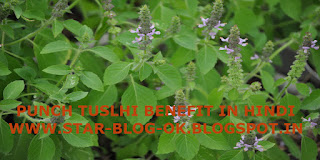 BENEFITS OF PANCH TUSLHI, how to use tulsi drops, panch tulshi ke fayde, PANCH TULSI DROPS BENEFITS, USES OF TULSI