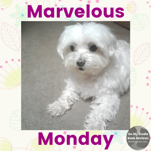 #LexiTheMaltese1 and On My Kindle Book Reviews on Instagram
