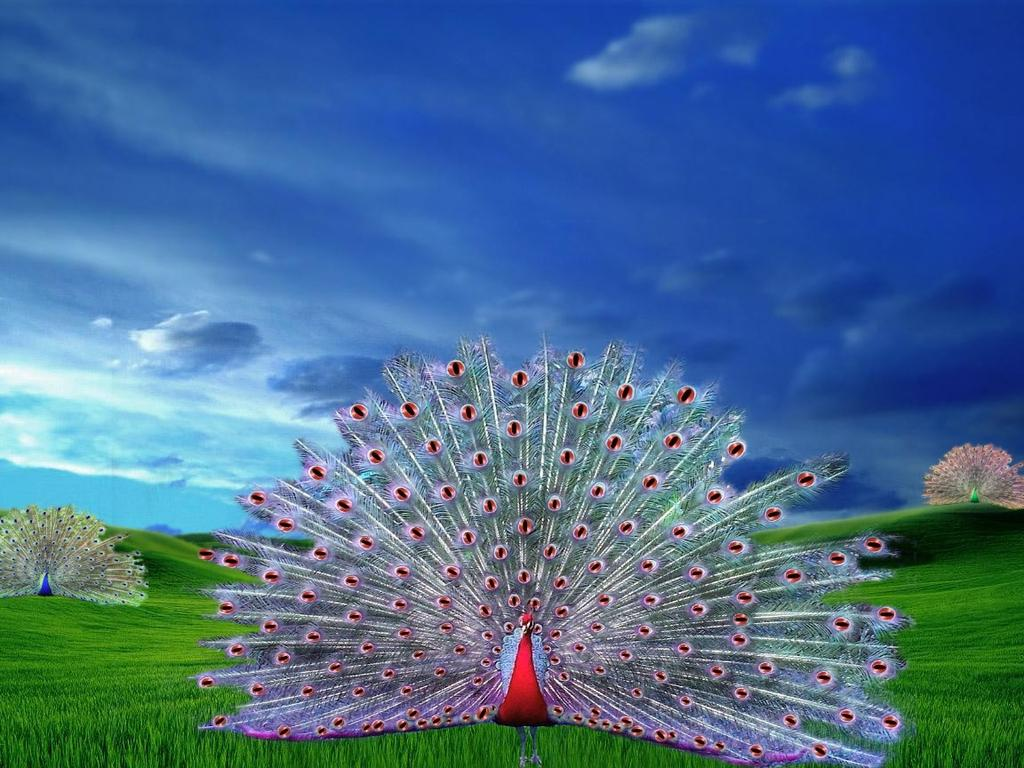 Happy Diwali Hd Wallpaper With Quotes Collections Beautiful Bird Peacock