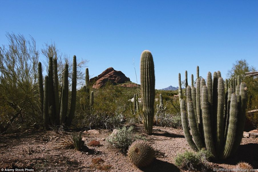 9. Botanical garden in the desert in Arizona, USA.