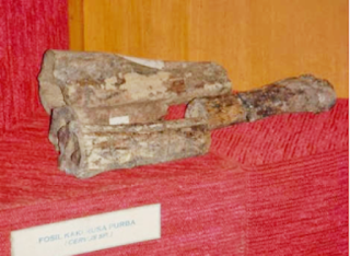 Fosil Rusa Purba