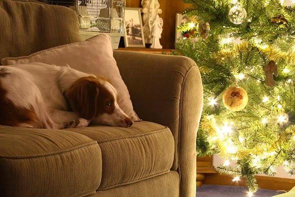 Πρωτότυπες ιδέες για χριστουγενιάτικα δώρα