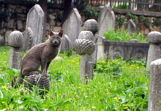 Bursa Cemetery