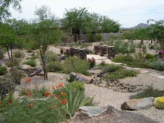 phoenix-rental-home-landscape-maintenance-who-is-responsible