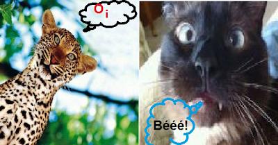 A onça e o gato (deslealdade ou esperteza?)