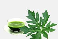 ekstrak daun pepaya gandul