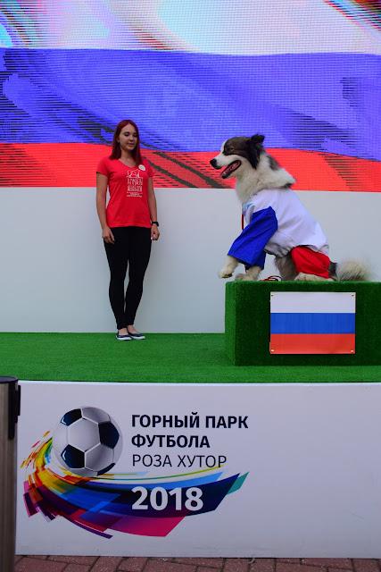 Лайка, Горный парк футбола Роза Хутор 2018, Красная поляна, Сочи