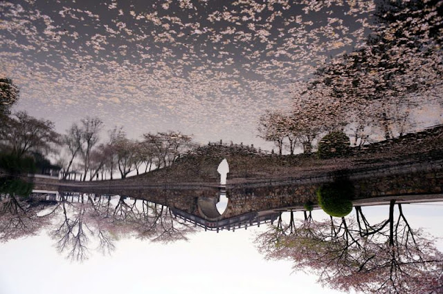 Beautiful type of trees, Photos from China