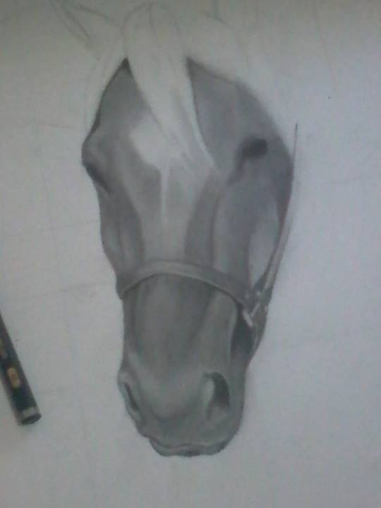 Desenhos Cavalo Realista