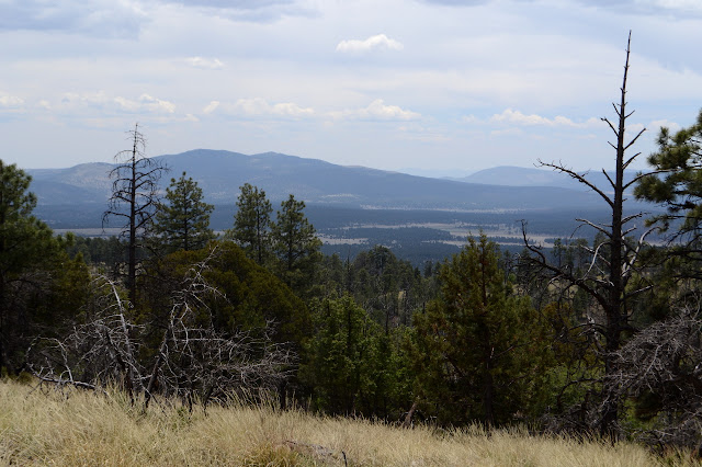 Collins Park and Elk Mountain