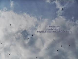 Γλάροι-πετούν-στον-ουρανό.