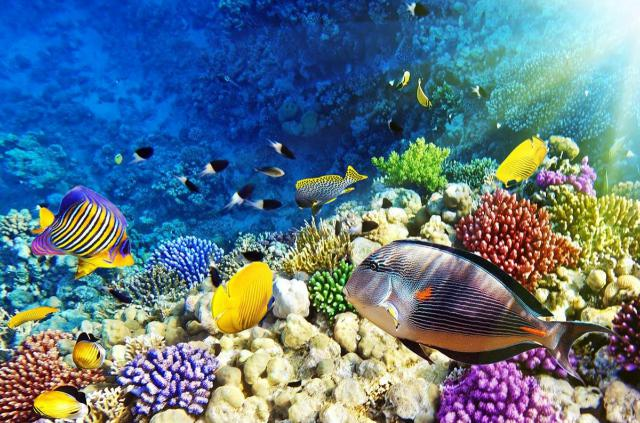 sharm-el-sheikh-barriera-corallina-poracci-in-viaggio