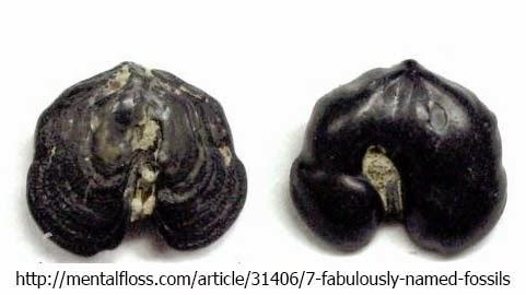 Bizarre Creature of the Day: Creature 43: Gluteus minimus
