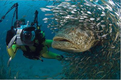 Imagenes Mundo Marino: foto de animal marino gigantesco