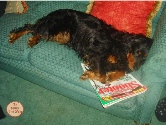 Molly The Wally. The Little Dog With A Blog!: Honestly Honest No Way On Wicked Wednesday!