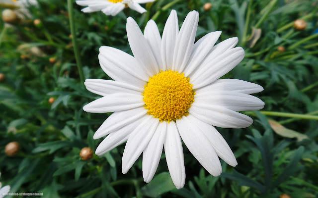 Foto witte bloem