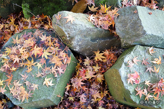 pierre et feuilles de momiji rougeoyantes