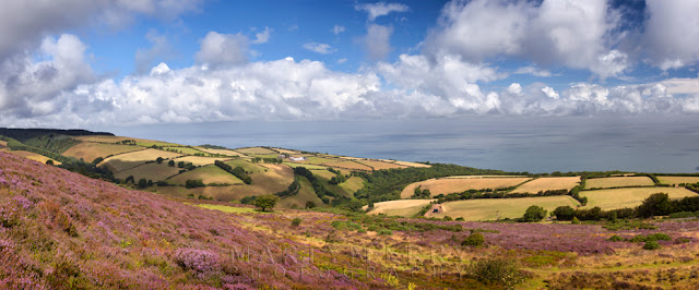Landscape at Porlock Common in Exmoor National Park by Martyn Ferry Photography