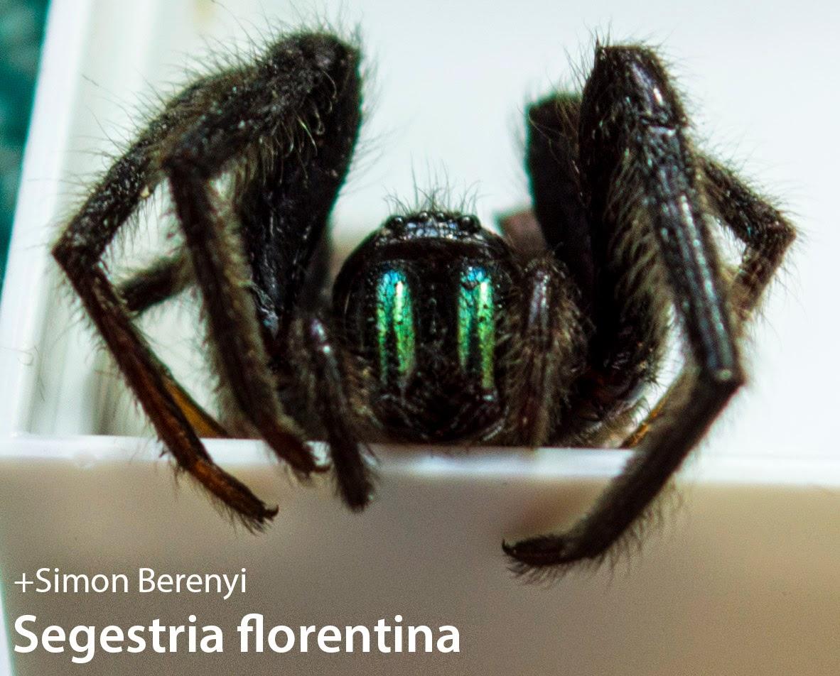 bristol pretty spider