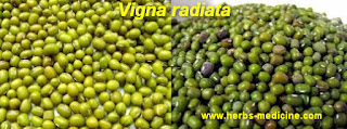 Herbal viagra use green beans