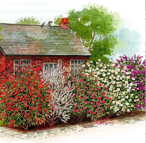 Le siepi miste il fascino della varieta 39 sfumature verdi - Arbusti sempreverdi da giardino ...