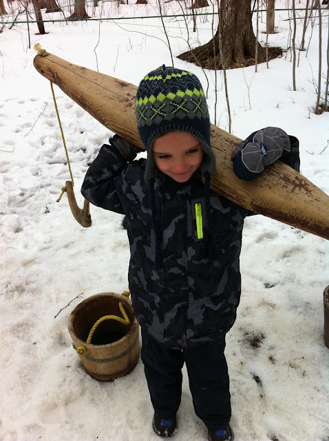 hauling maple sap