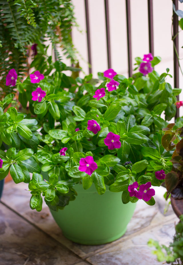 The easiest plants to keep alive if you live in Texas! #gardentips #texasgarden #texasflowers