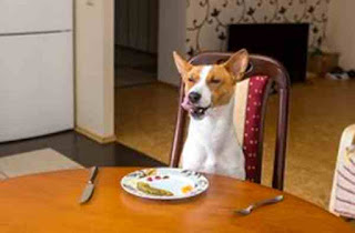 Dog eats breakfast
