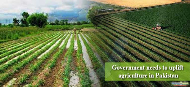 Agriculture required government policies in GDP