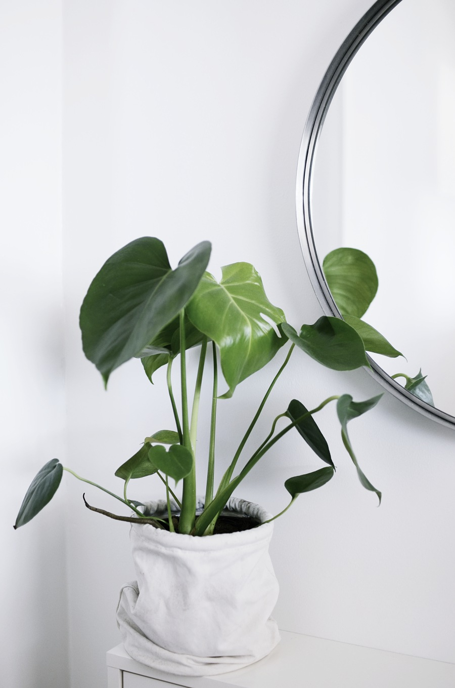 FENG SHUI HALL, monstera, spegel rund, ikea skoskåp