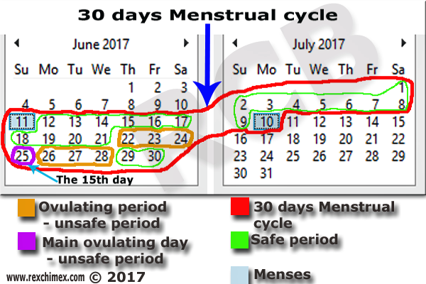 MENSTRUAL CYCLE AND OVULATION PERIOD (Made easy to ...