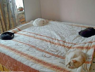 Lustige Katzen schlafen auf Bett - Platz im Bett lustig - Beste Bilder Blog
