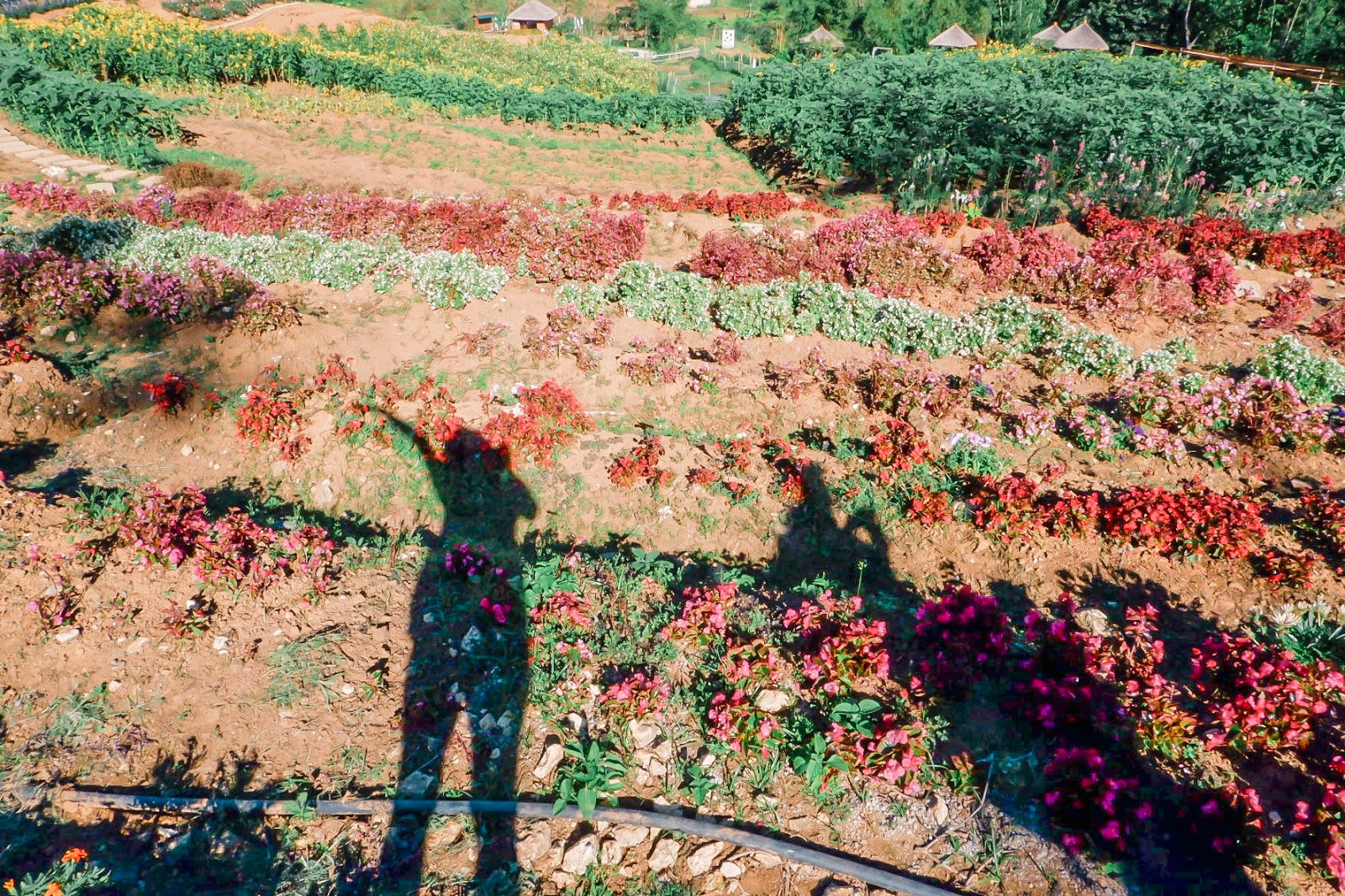 Side Trip from Mt. Kandungaw to Mt. Talongon Flower Garden