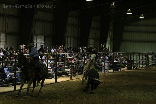 #rodeo #cowboys #cows #roping #horses