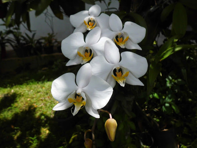 Moon Orchid Galleries