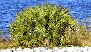 Remède naturel de la prostate à base de plantes