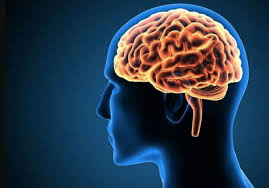 8 Hal yang Dapat Merusak Otak. The Zhemwel