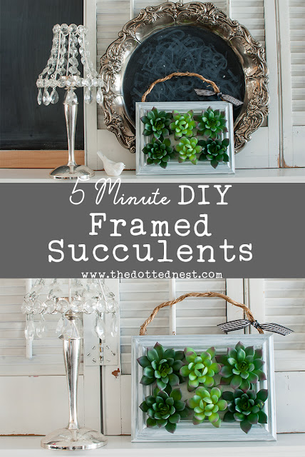 How to Make Framed Succulents