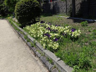枚方市・市民の森(鏡伝池緑地)の花壇