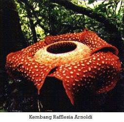 Flora Taman Nasional Kerinci Seblat