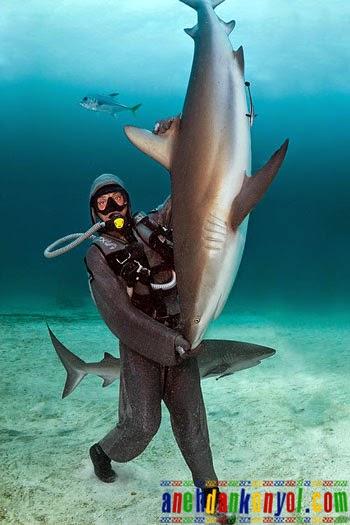Ikan Hiu Dihipnotis Penyelam Wanita