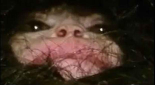 Video Of An Unidentified Alien Creature From Azerbaijan Creeps Out Netizens