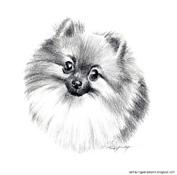 dog pencil drawings drawing easy pomeranian dogs artist rogers dj signed sketches amazing sketch portrait painting artwork wallpapers animal cartoon