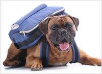 Cours de dressage pour chien