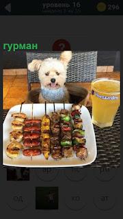 Сидит собака гурман перед едой за столом и выбирает что лучше