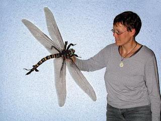 Comparación tamaño Meganeura