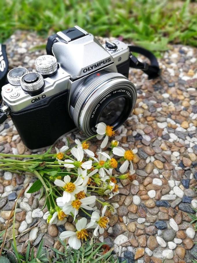 Tujuh Tips Fotografi Mengambil Gambar Bunga