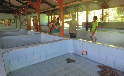 Turtle Tanks - Serangan Island Turtle Conservation Centre