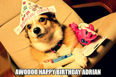 Happy Birthday Dog Memes