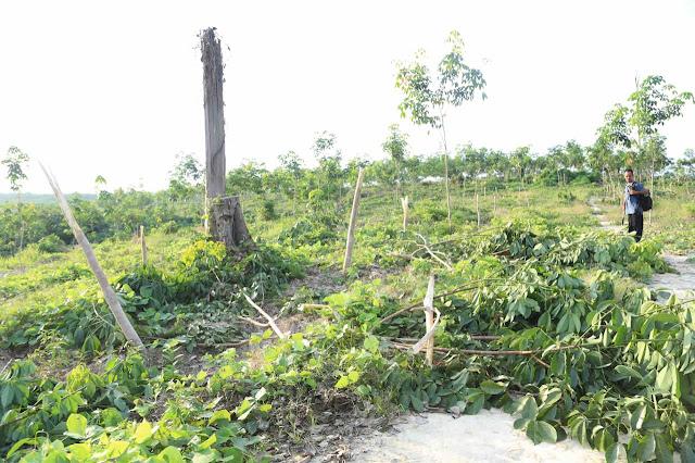 Setengah Konsesi PT ALN di Kawasan Gajah dan Tanam Karet di Bibir Sungai